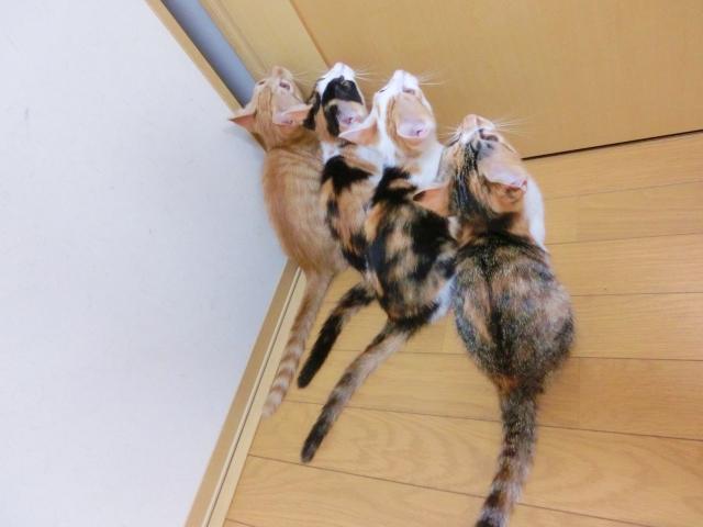 扉の前で待つ猫