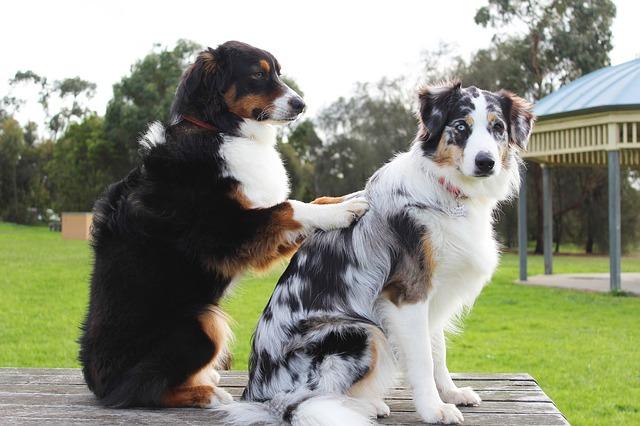 肩もみしている犬