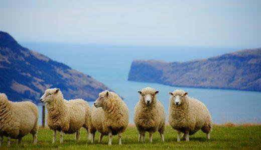 ニュージーランドのホストファミリーが超どケチだった話|お弁当にパン1個だけ
