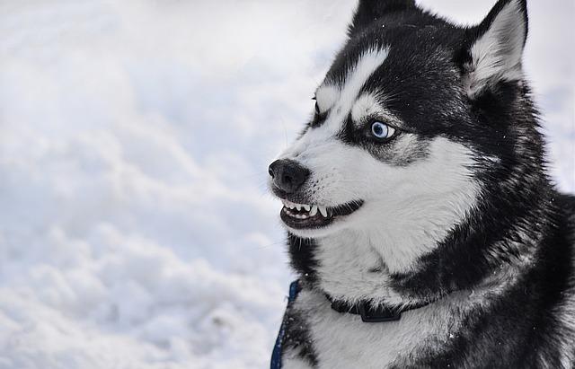 怖い顔をした犬