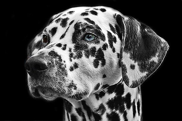 マダラ顔の犬